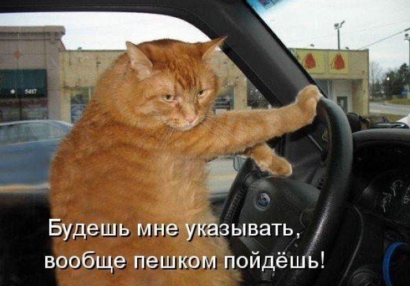 Правила поведения пассажира в машине